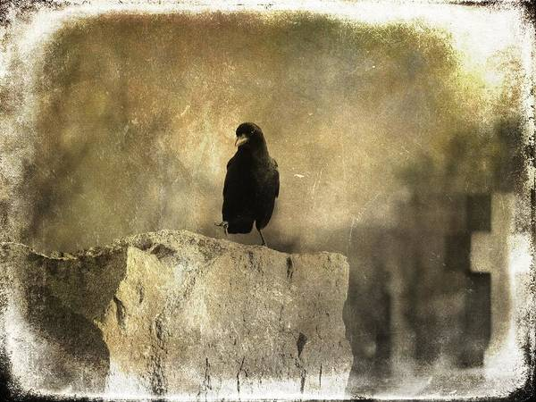 Wall Art - Photograph - Alone With His Thoughts by Gothicrow Images