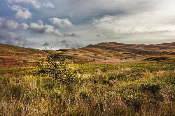 Wall Art - Photograph - Along The Scottish Highlands by Debra and Dave Vanderlaan
