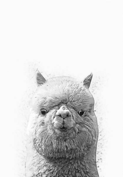 Digital Art - Alpaca  by Zapista Zapista