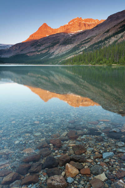 Bow River Wall Art - Photograph - Alpenglow At Bow Lake by Glowingearth