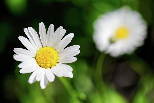Photograph - Alpine Flowers by Todd Klassy