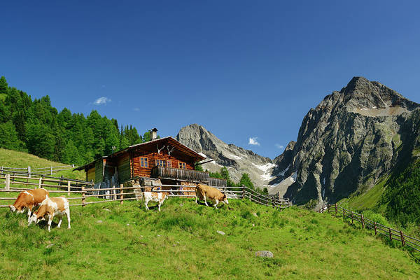 Chalet Photograph - Alpine Hut With Cows In Front Of by Andreas Strauss / Look-foto