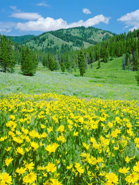 Wall Art - Photograph - Alpine Meadow In Wyoming by Ron thomas