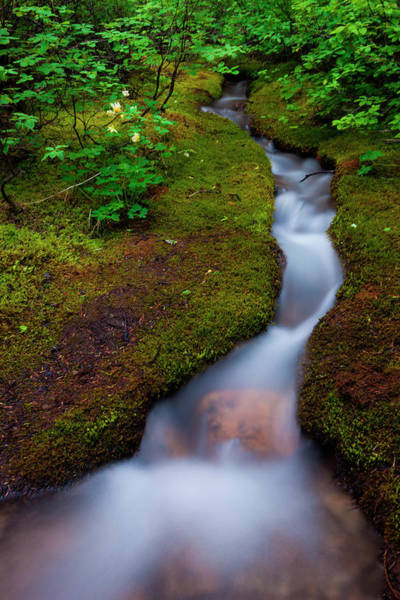 Art In Canada Photograph - Alpine Stream, A Time Lapse Effect by Mint Images/ Art Wolfe
