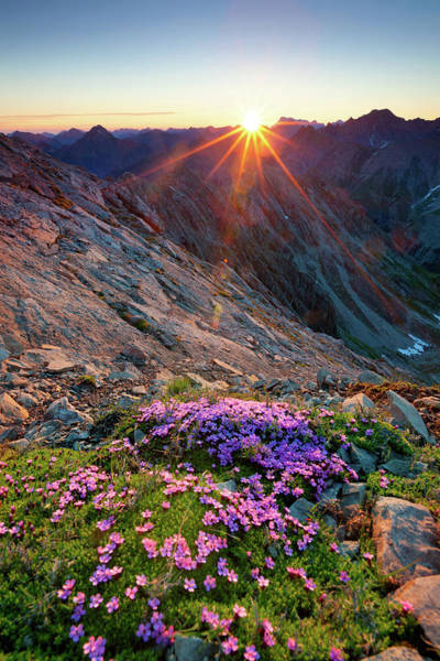 Object Photograph - Alpine Sunrise With Flowers In The by Wingmar