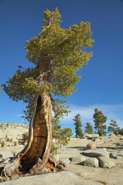Tioga Photograph - Alpine Wilderness, Yosemite Np, Ca by Eastcott Momatiuk