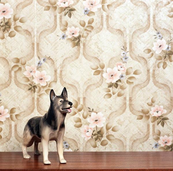 Kitsch Photograph - Alsation Dog by Steven Taylor