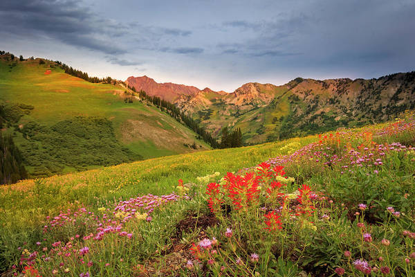 Wall Art - Photograph - Alta August Wildflowers by Johnny Adolphson