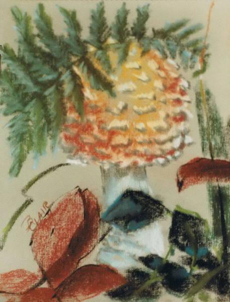 Pastel - Amanita Muscaria by Barbara Keith