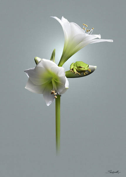 Wall Art - Digital Art - Amaryllis And Frog by Spadecaller