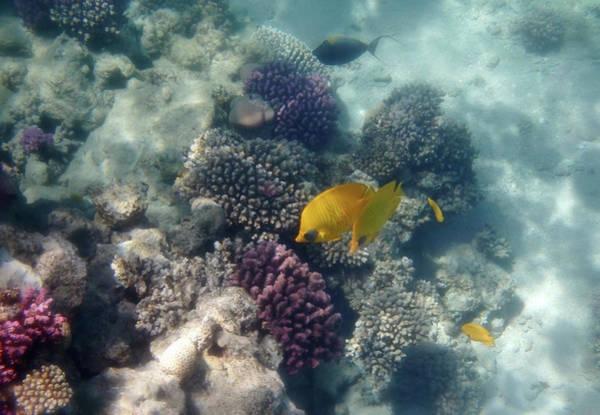 Photograph - Amazing Beautiful And Fantastic Red Sea by Johanna Hurmerinta