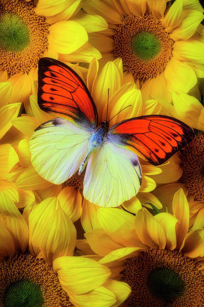 Photograph - Amazing Orange Yellow Butterfly by Garry Gay