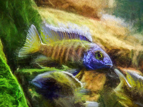 Digital Art - Amazing Peacock Cichlid by Don Northup