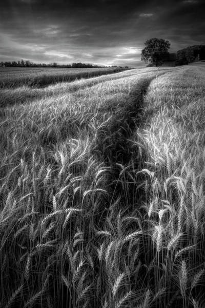 Wall Art - Photograph - Amber Waves Of Grain In Black And White by Debra and Dave Vanderlaan
