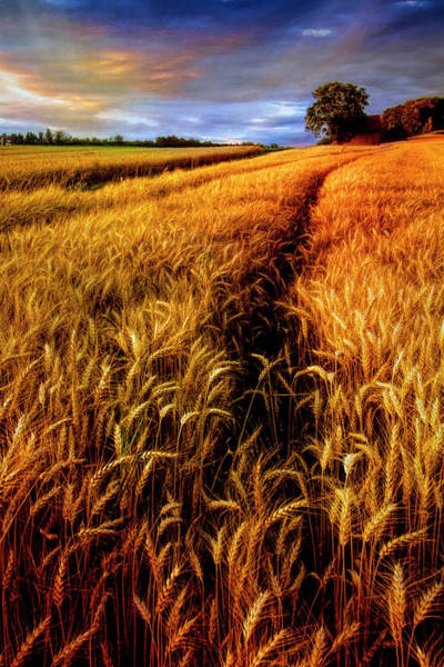 Wall Art - Photograph - Amber Waves Of Grain Painting  by Debra and Dave Vanderlaan