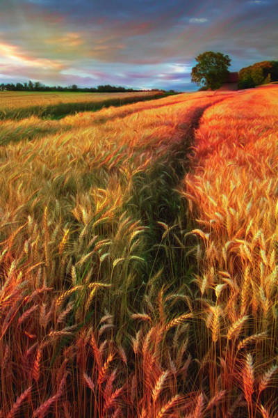 Wall Art - Photograph - Amber Waves Of Grain Watercolors Painting  by Debra and Dave Vanderlaan