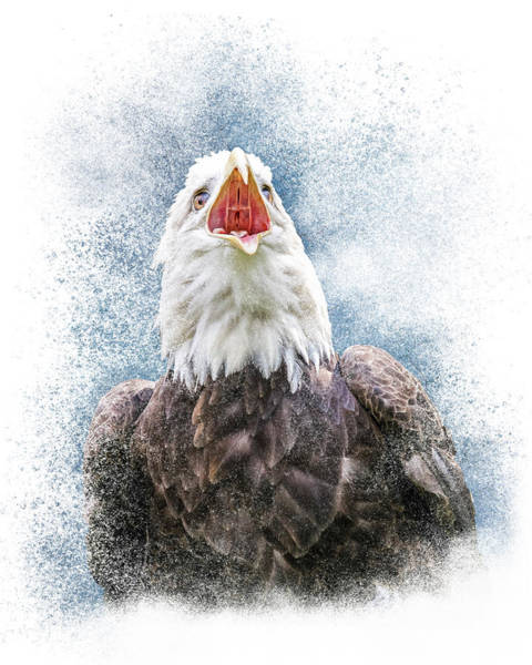 Photograph - Call Of The American Bald Eagle by Patti Deters