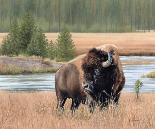 North American Wildlife Wall Art - Painting - American Bison by Rachel Stribbling