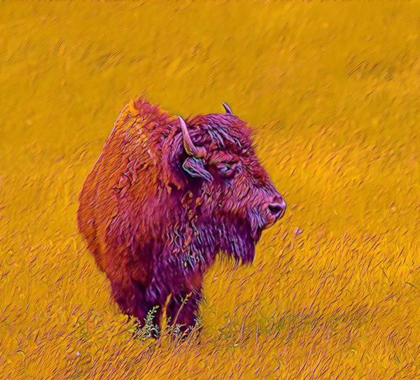 Mixed Media - American Buffalo by Susan Rydberg