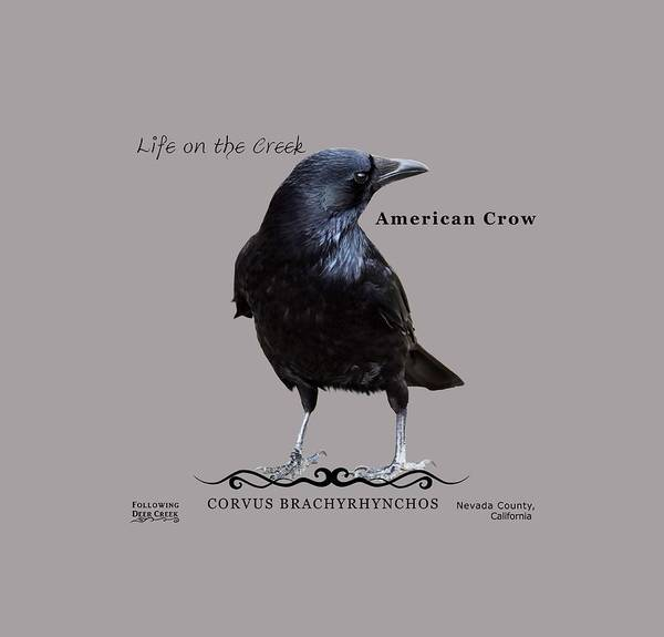 Digital Art - American Crow by Lisa Redfern