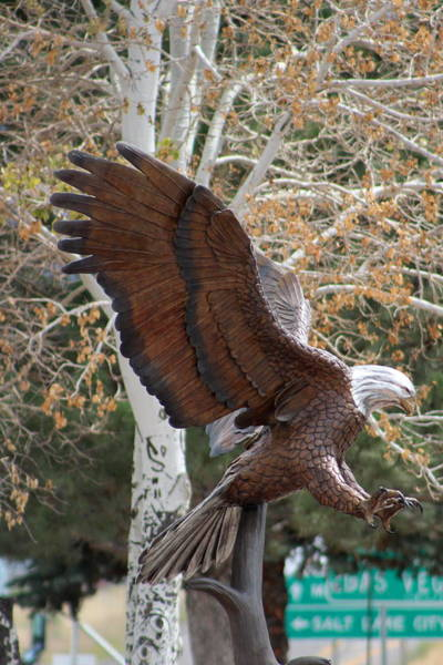 Photograph - American Eagle And Birch Tree by Colleen Cornelius
