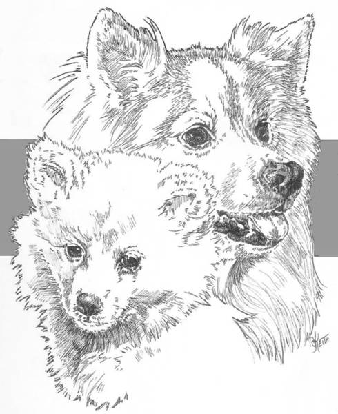 Drawing - American Eskimo And Pup by Barbara Keith