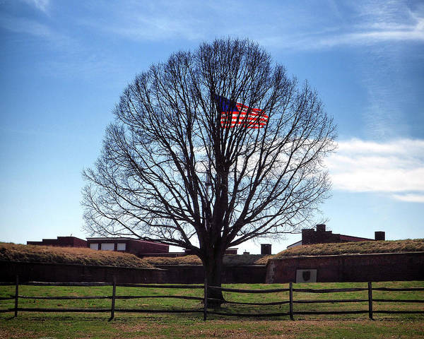 Photograph - American Flag Tree At Fort Mchenry by Bill Swartwout Photography