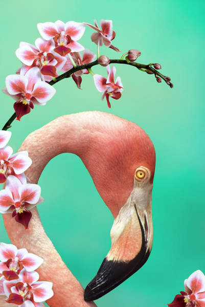 Wall Art - Photograph - American Flamingo With Orchids by Gail Shumway
