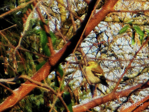 Photograph - American Goldfinch by Rockin Docks