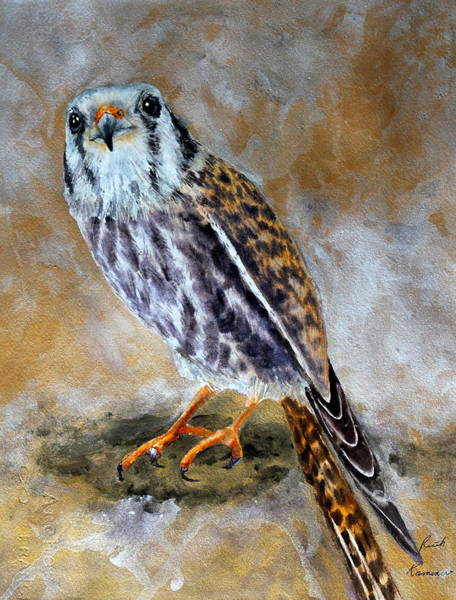 Painting - American Kestrel by Ruth Kamenev