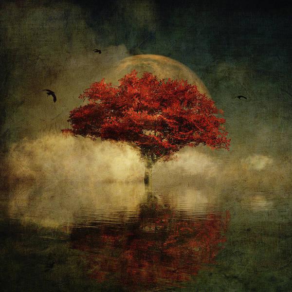Digital Art - American Oak With Full Moon by Jan Keteleer