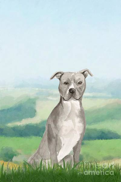 Pedigree Painting - American Staffordshire Terrier by John Edwards