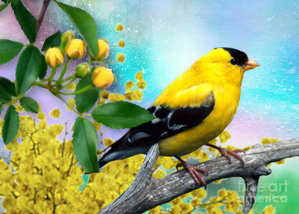 Mixed Media - American Yellow Finch by Morag Bates