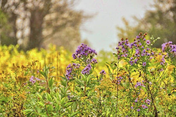 Photograph - Amethyst And Golden Rod by JAMART Photography