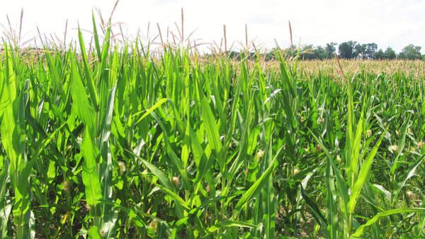 Rockville Photograph - Amid The Corn by Jackson Harmeyer