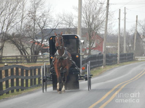 Photograph - Amish Buggy On A Late Autumn Afternoon by Christine Clark