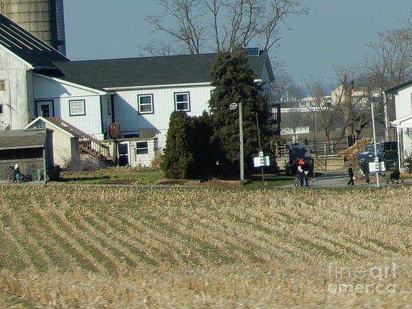 Photograph - Amish Winter Midday Gathering by Christine Clark