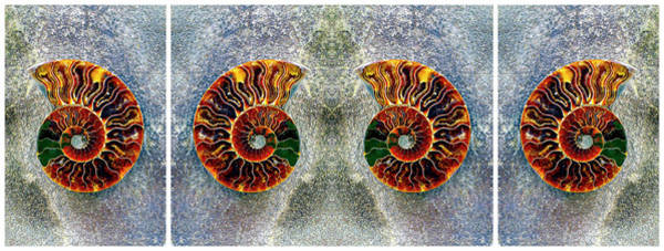 Photograph - Ammonite Triptych Panel  by Paul W Faust - Impressions of Light