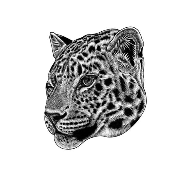 Wall Art - Drawing - Amur Leopard Cub - Ink Illustration by Loren Dowding