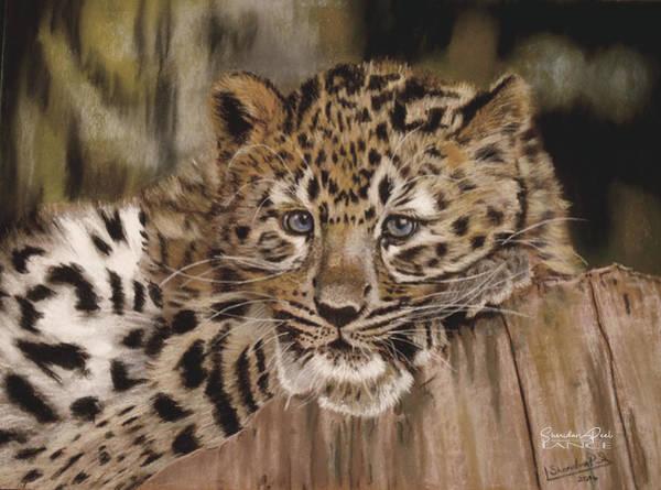 Pastel - Amur Leopard Cub by Lance Sheridan-Peel