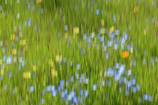 Wall Art - Photograph - An Abstract Of A Field Of Flowers by Brenda Tharp