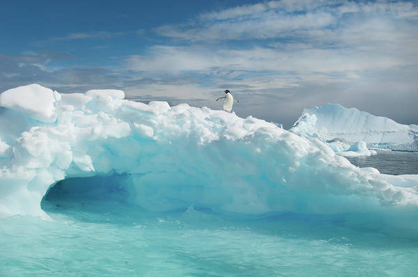 Wall Art - Photograph - An Adelie Penguin On Top Of An Iceberg by Mint Images - David Schultz