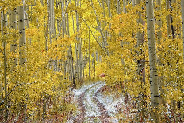 Late Autumn Wall Art - Photograph - An Autumn Path by Leland D Howard