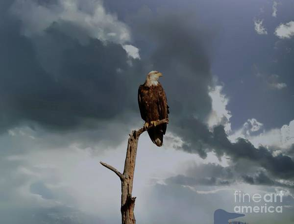 Wall Art - Photograph - An Eagle In The Clouds by Jeff Swan