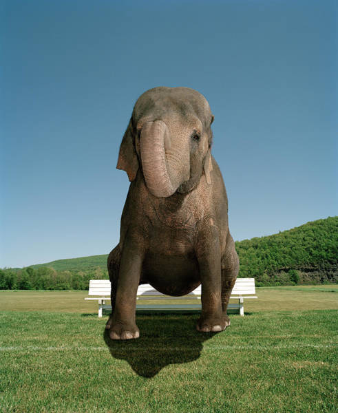 Out Of Context Photograph - An Elephant Sitting On A Park Bench by Matthias Clamer