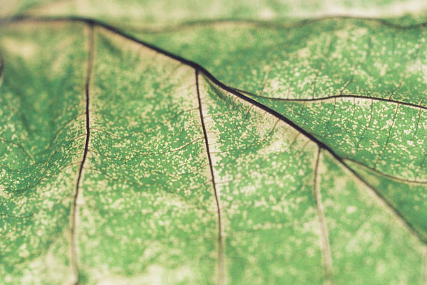 Wall Art - Photograph - An Evening With A Dying Leaf 1 by Alison Reid
