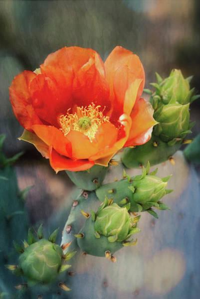 Wall Art - Photograph - An Orange Crush  by Saija Lehtonen