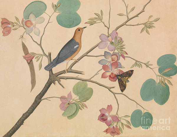 Wall Art - Painting - An Orange Headed Ground Thrush And A Moth On A Purple Ebony Orchid Branch, 1778 by Shaikh Zain ud-Din