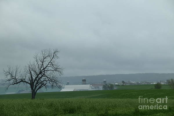 Photograph - An Overcast Day On The Farmstead by Christine Clark