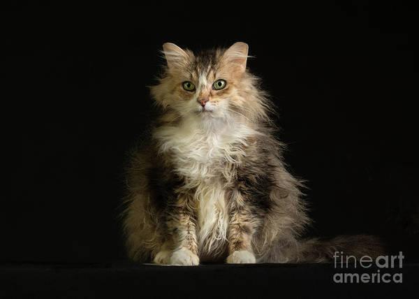 Photograph - Ana's Eyes by Susan Warren
